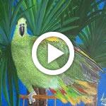 video_pitturaEdisegno_video